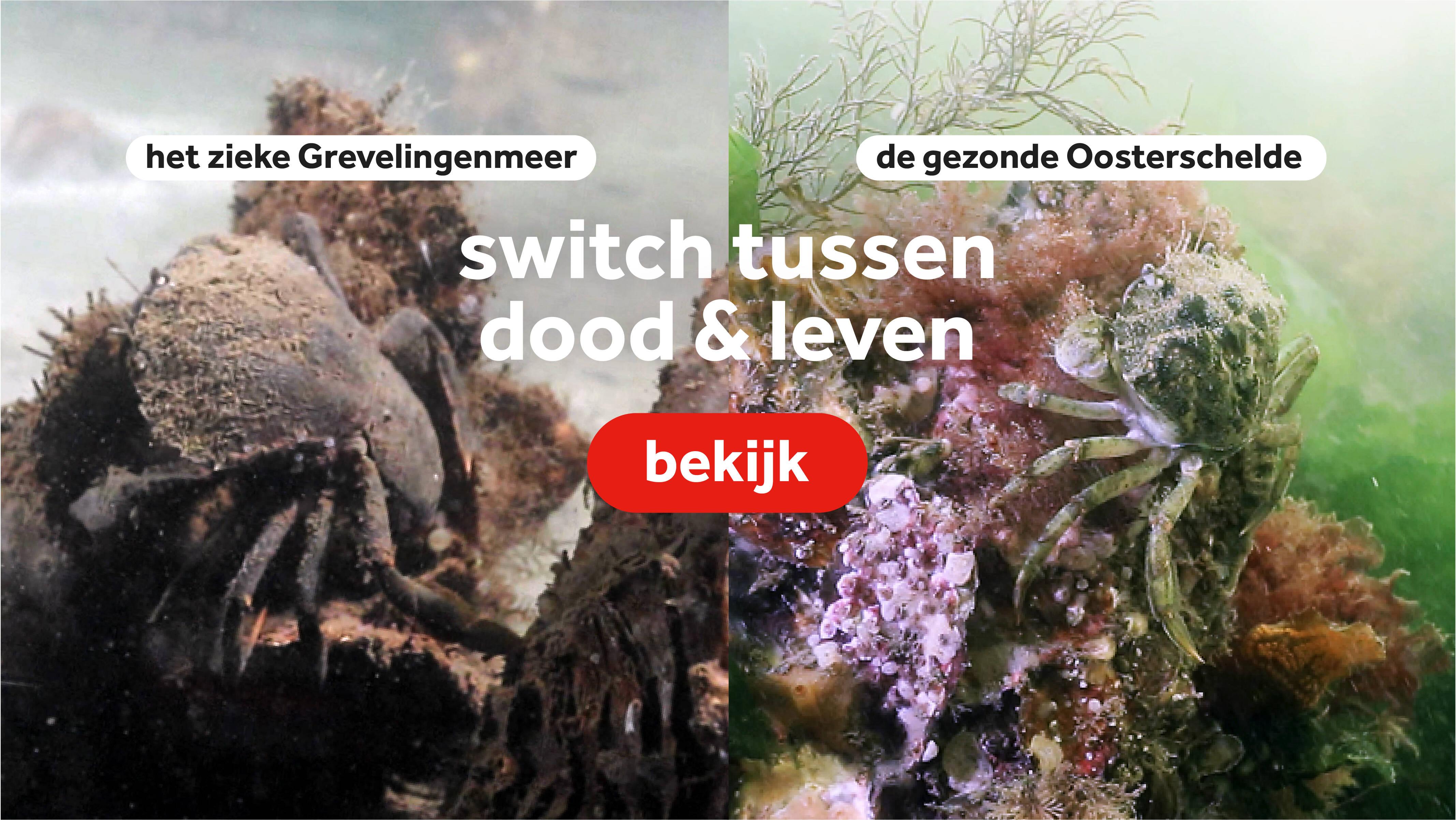 Adembenemend: Grevelingenmeer & Oosterschelde 🌊🐟 - NOS op 3